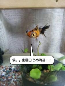 iphone_20120130014547